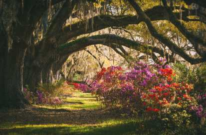 9 Things To Do In Charleston, South Carolina (21)