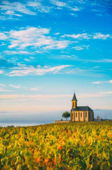 9 Beautiful Wine Regions In France You Need To Holiday In (4)