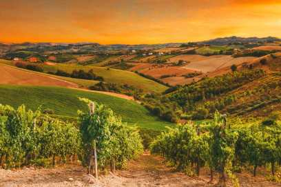 9 Beautiful Wine Regions In France You Need To Holiday In (7)