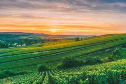 9 Beautiful Wine Regions In France You Need To Holiday In (16)