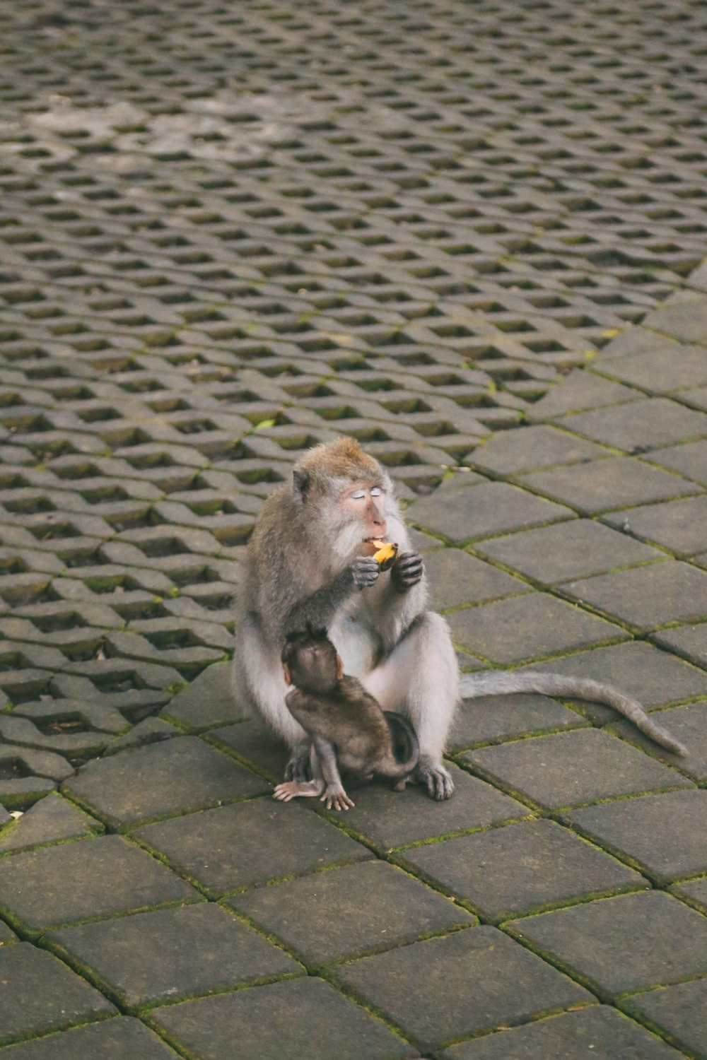 Ubud Monkey Forest In Bali - Things To Know Before You Visit (7)