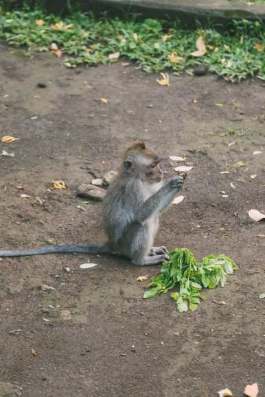 Ubud Monkey Forest In Bali - Things To Know Before You Visit (14)