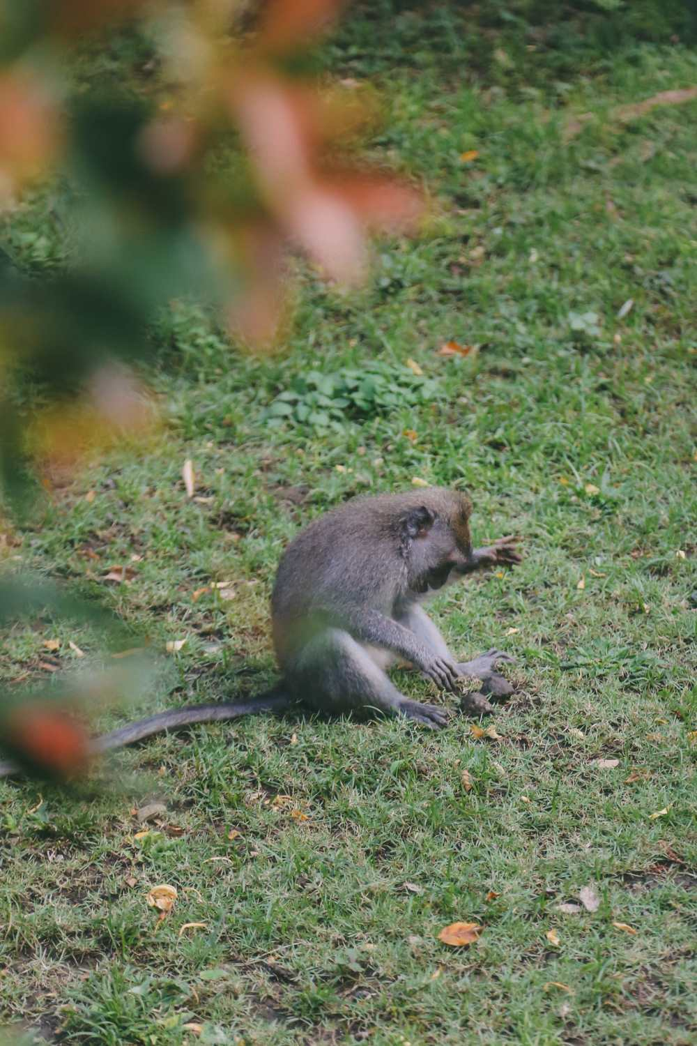 Ubud Monkey Forest In Bali - Things To Know Before You Visit (15)