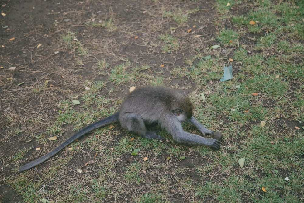 Ubud Monkey Forest In Bali - Things To Know Before You Visit (16)