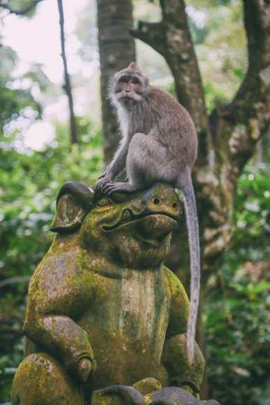 Ubud Monkey Forest In Bali - Things To Know Before You Visit (22)