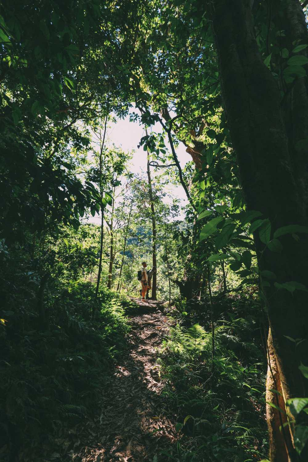 Hiking To The Top Of A Volcano... In the Caribbean! (5)