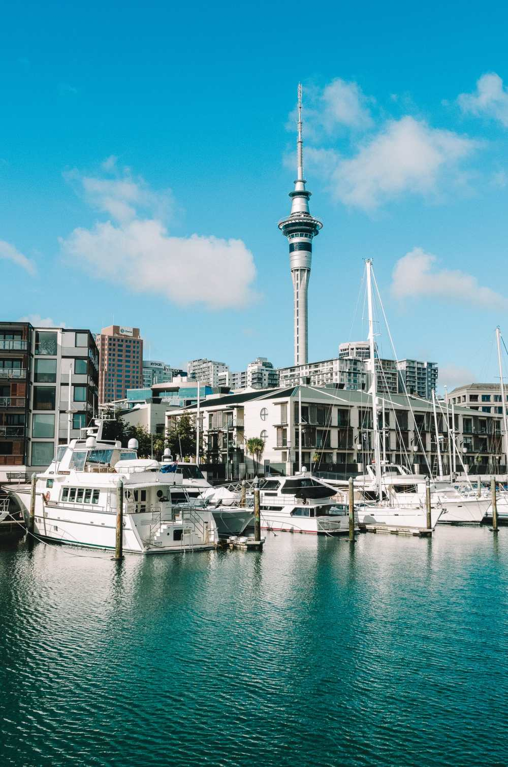 Best Things To Do In Auckland (10)