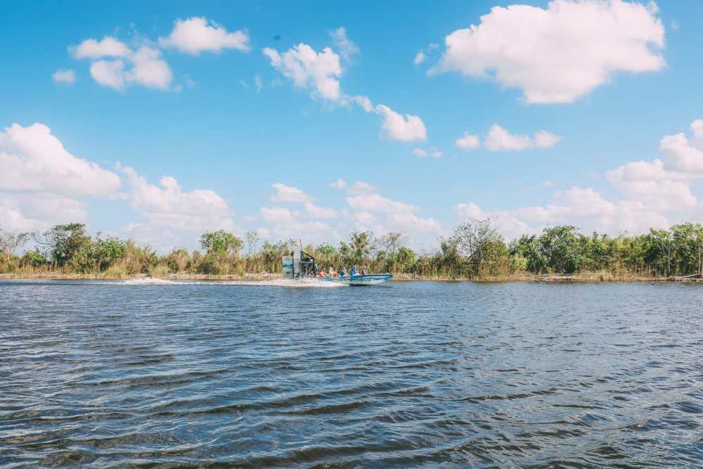Searching For Wild Alligators in Florida (10)