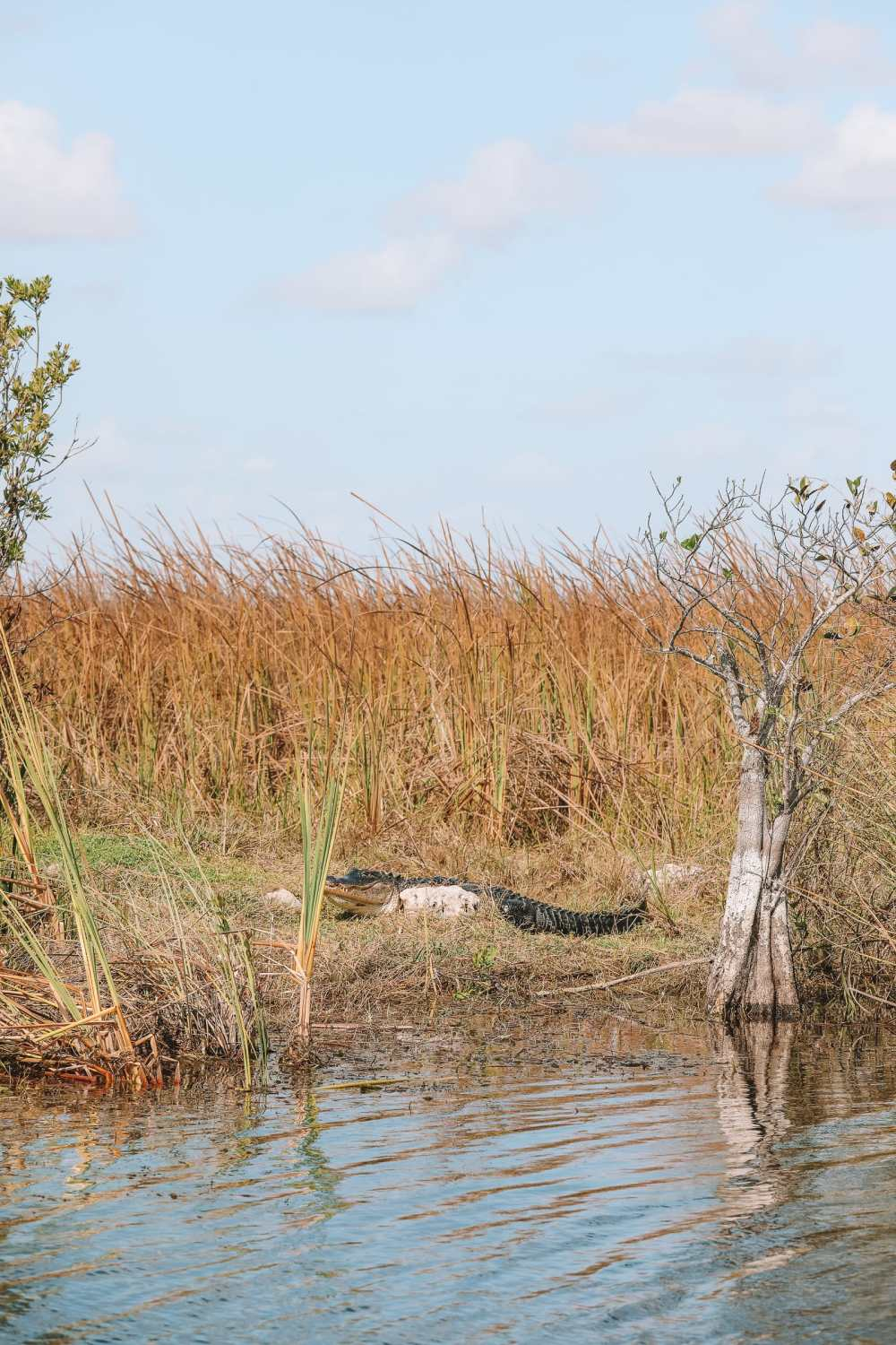 Searching For Wild Alligators in Florida (16)