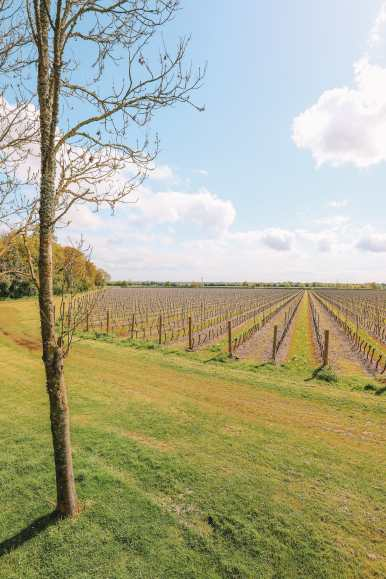 Where To Visit (And Stay) In A Vineyard In England (23)