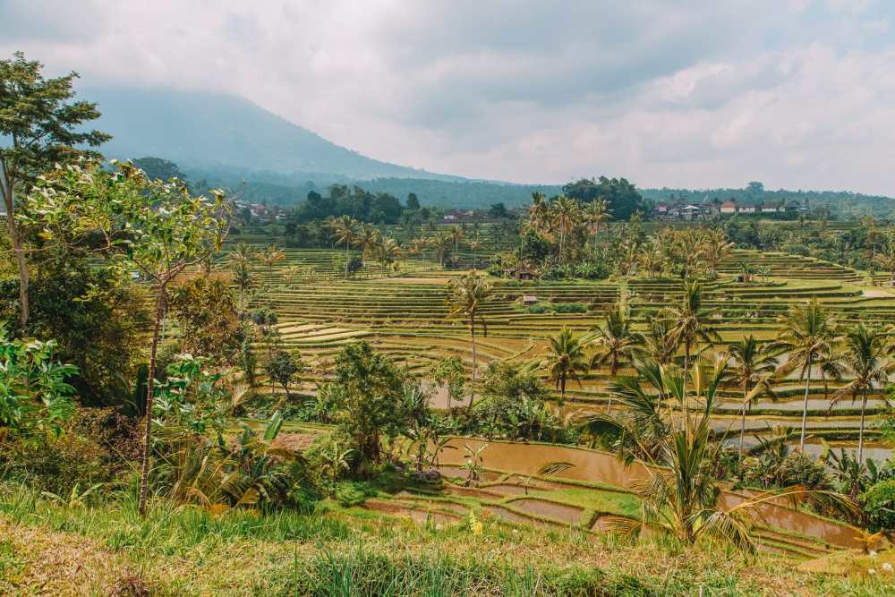 The 9 Best Hikes In Bali You Have To Experience (4)