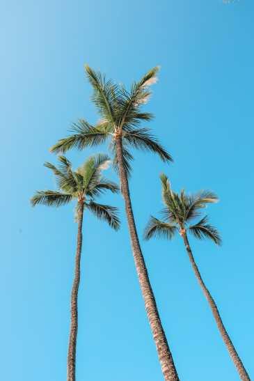 24 Hours In Maui, Hawaii (18)