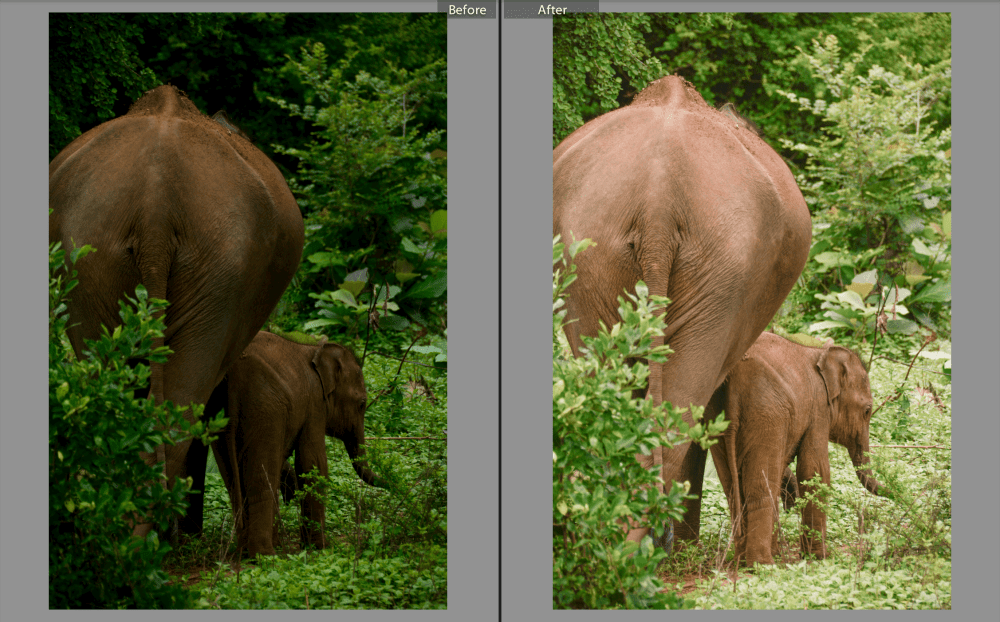 9 Totally Free Lightroom Presets To Enhance Your Photos (3)