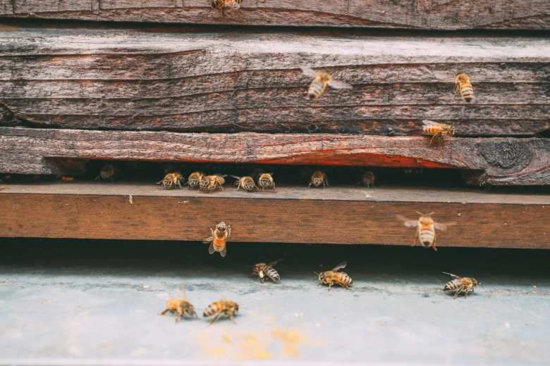 How To Be A Bee-Keeper For A Day In England (3)