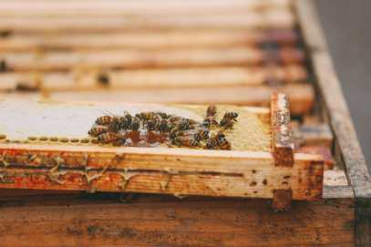 How To Be A Bee-Keeper For A Day In England (7)