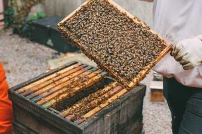 How To Be A Bee-Keeper For A Day In England (9)