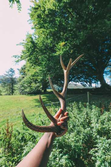 Searching For Wildlife In Exmoor, England (33)