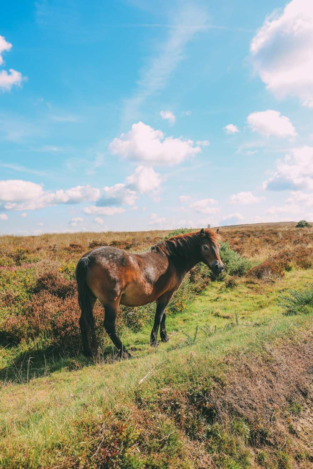 Searching For Wildlife In Exmoor, England (34)