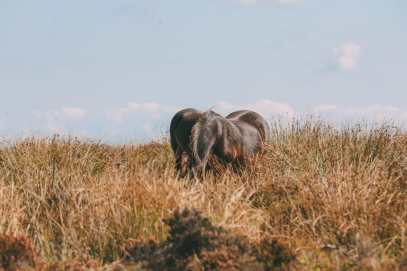 Searching For Wildlife In Exmoor, England (35)