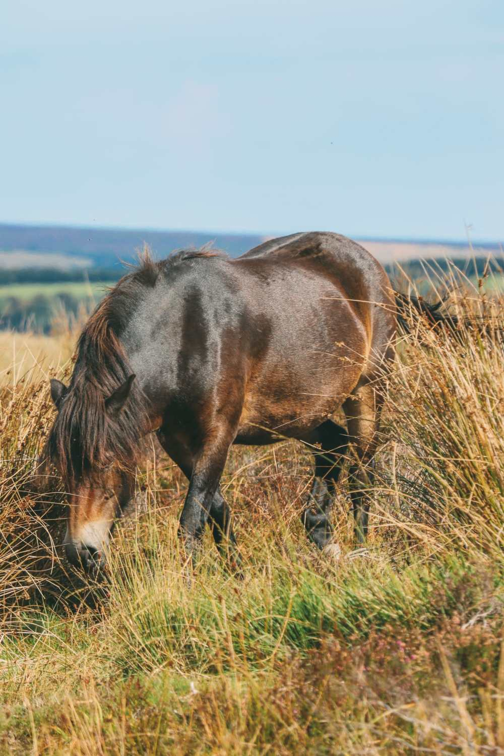 Searching For Wildlife In Exmoor, England (36)