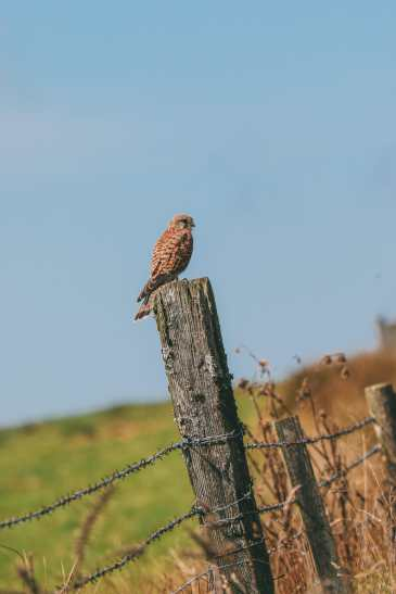 Searching For Wildlife In Exmoor, England (39)
