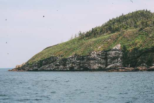Searching For Puffins In Newfoundland, Canada (23)