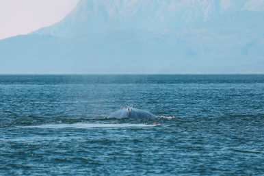 Humpback Whales, Glaciers And Northern Lights – The Most Magical Experience Aboard Celebrity Cruises Solstice To Alaska (8)