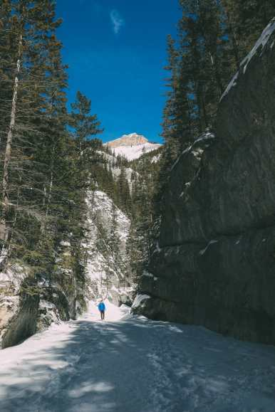 Grotto Canyon, Wolfdogs And The Canadian Rockies (9)