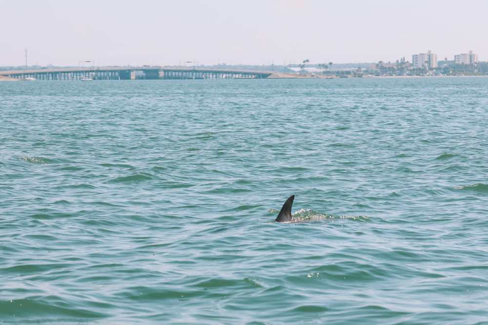 48 Hours In Clearwater Beach, Florida (31)