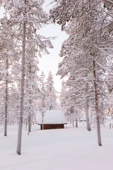 The Northern Lights Village And Star Arctic... In Lapland, Finland (20)
