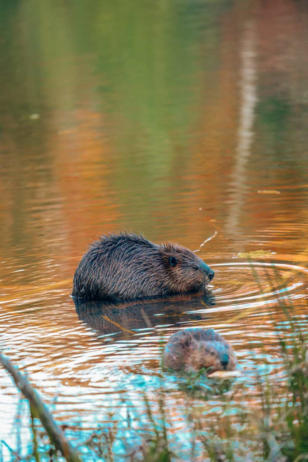 Getting Lost In Nature (And With Beavers) In Quebec, Canada (12)