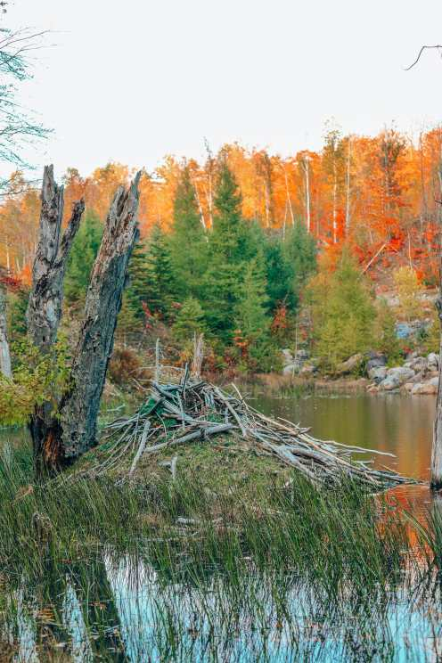 Getting Lost In Nature (And With Beavers) In Quebec, Canada (15)