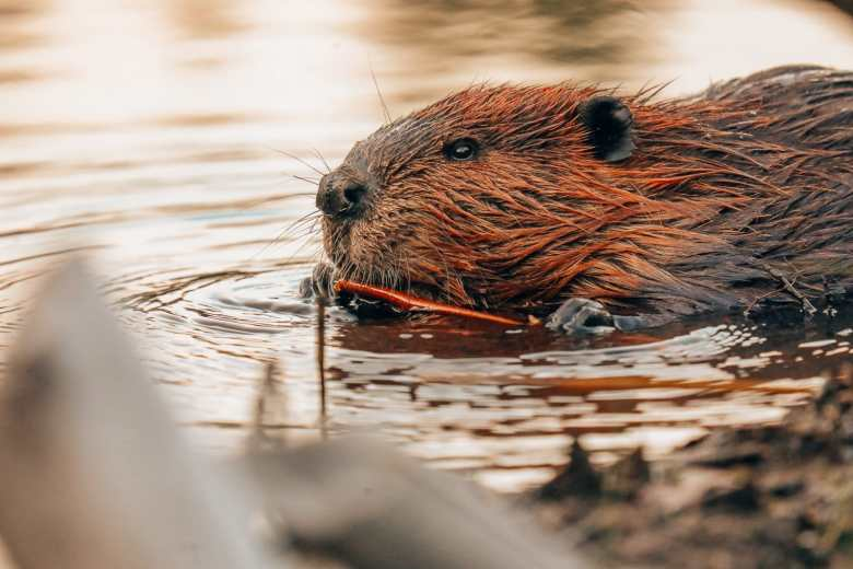 Getting Lost In Nature (And With Beavers) In Quebec, Canada (29)