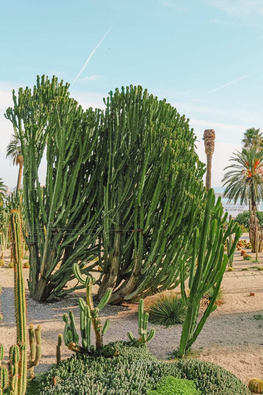 Mosse%CC%80n Costa i Llobera %E2%80%93 Cactus Garden - Mossen Costa I Llobera Gardens Ticket