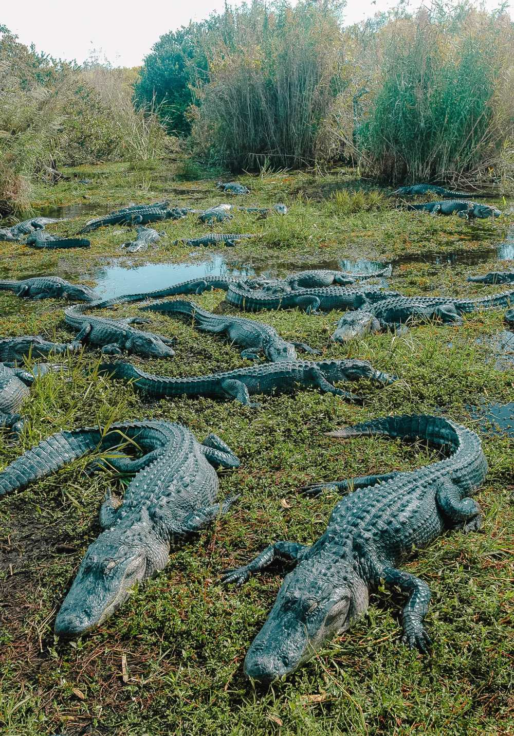 Best Things To Do In The Everglades (5)