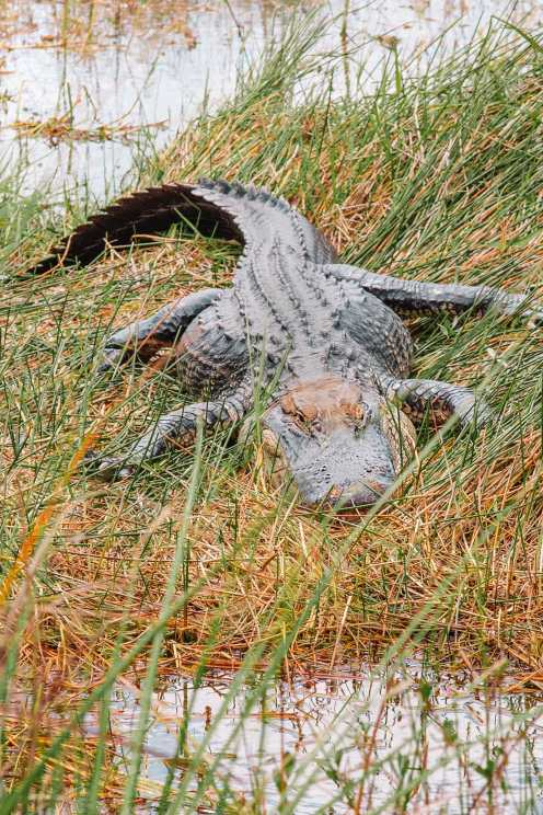 Best Things To Do In The Everglades (10)