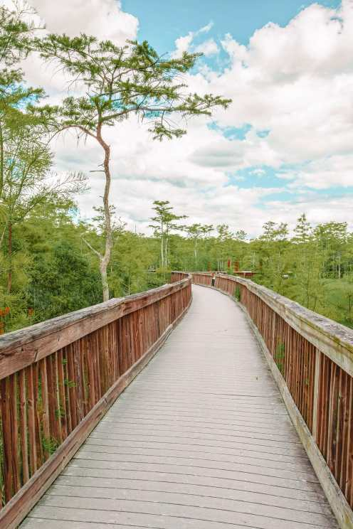 Best Things To Do In The Everglades (8)