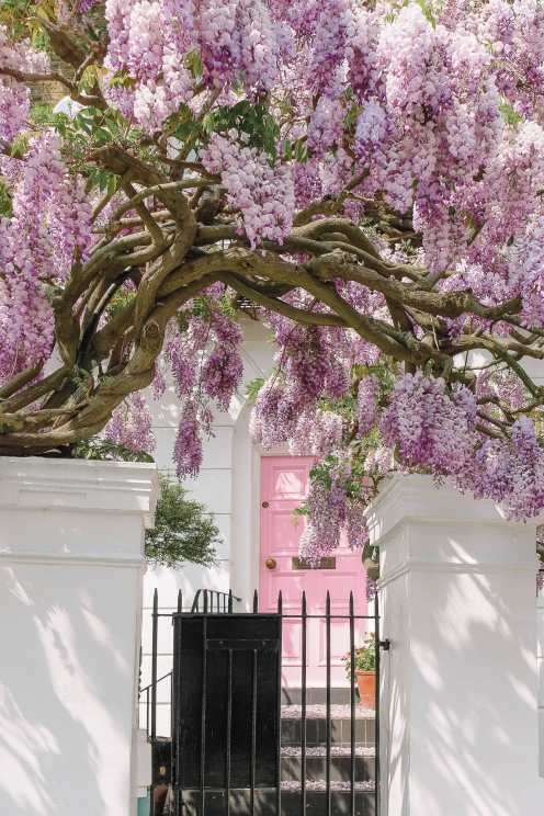 Beautiful homes in Notting Hill
