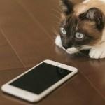【格安SIM】スマホ代節約!楽天モバイルのコミコミプランLにMNPしたリアルな感想