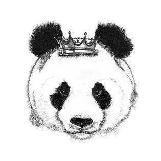 panda and the prince
