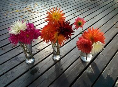 flowers-1573167_1280