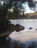 White heron on the lake