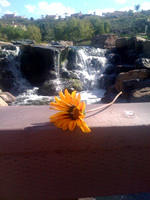 Gazania and waterfall