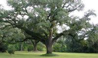 yardtree