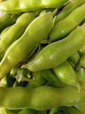 Broad beans in their pods.