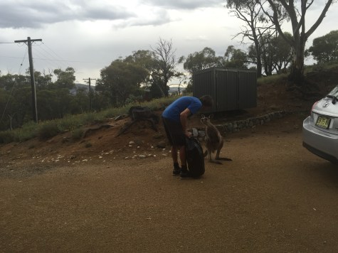 Roo inspecting the rubbish