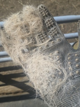 glove shedding hair