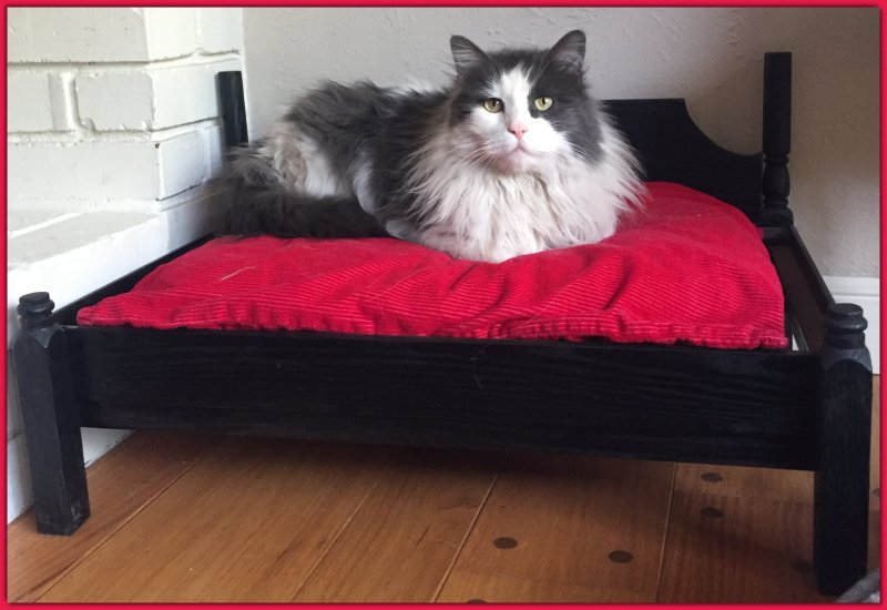 Colonial Cat Bed Kitty Daybed