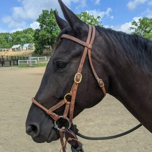 Schooling Bridles & Headstalls