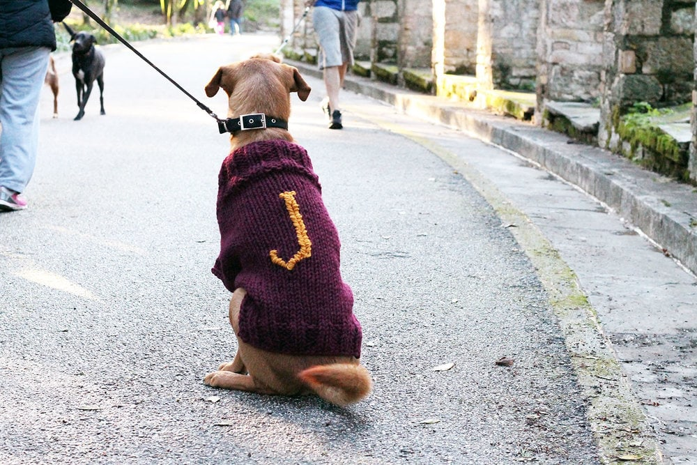 Weasley-Knitted-Dog-Sweater-Pattern
